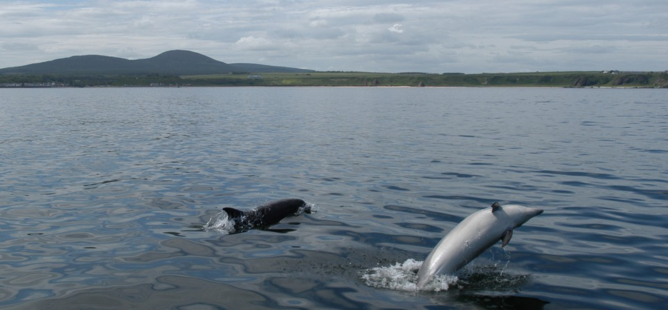 The Moray Firth Dolphins